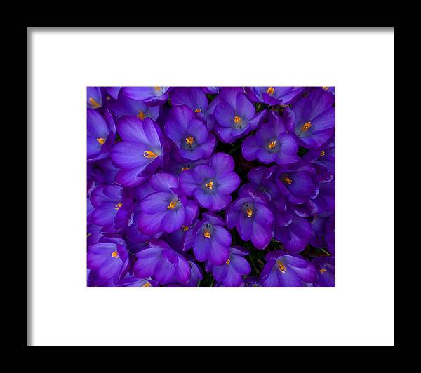 Flower Framed Print featuring the photograph Purple Flowers by Benjamin Reed