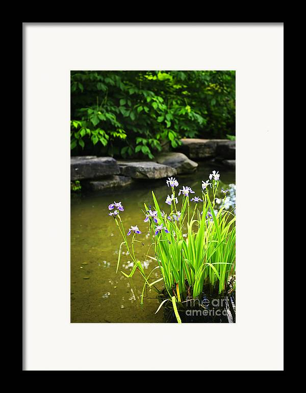 Garden Framed Print featuring the photograph Purple Irises In Pond by Elena Elisseeva
