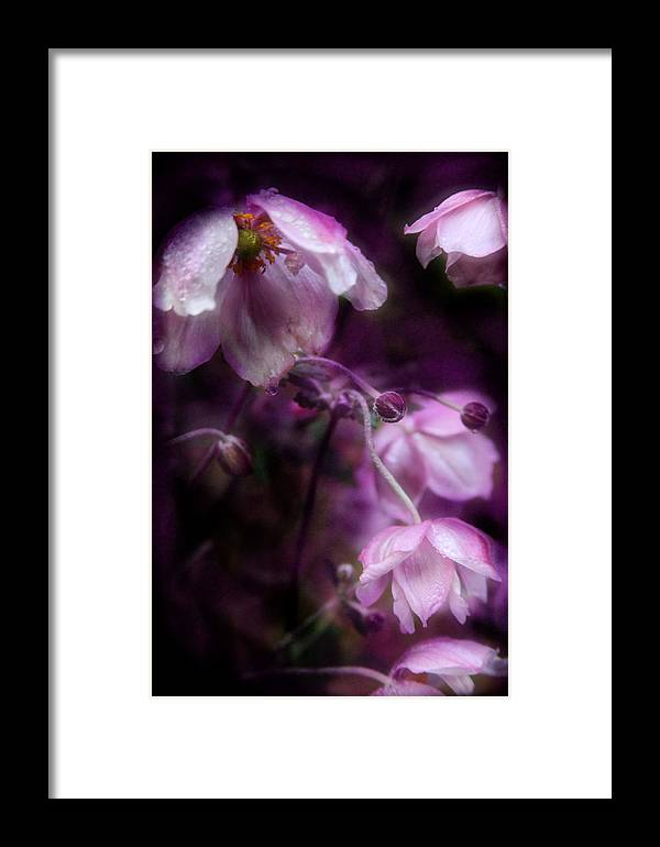 Flower Framed Print featuring the photograph Purple Perennial Flowers by Sally Bauer