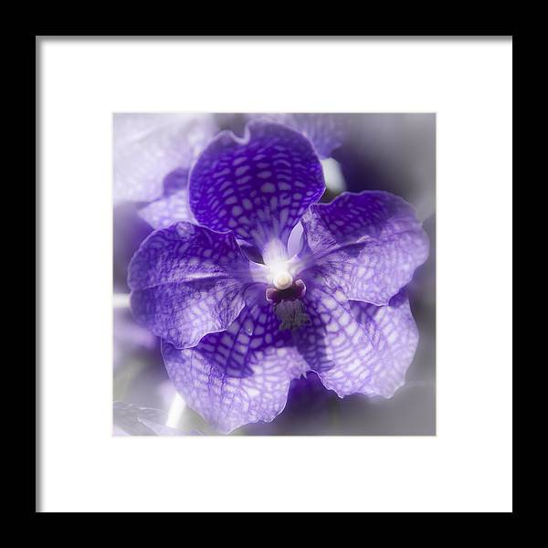 Purple Framed Print featuring the photograph Purple Perfection by Steve Smith