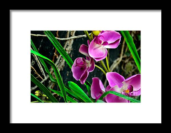 Phil Dionne Photography Framed Print featuring the photograph Purple Petals II by Phil Dionne