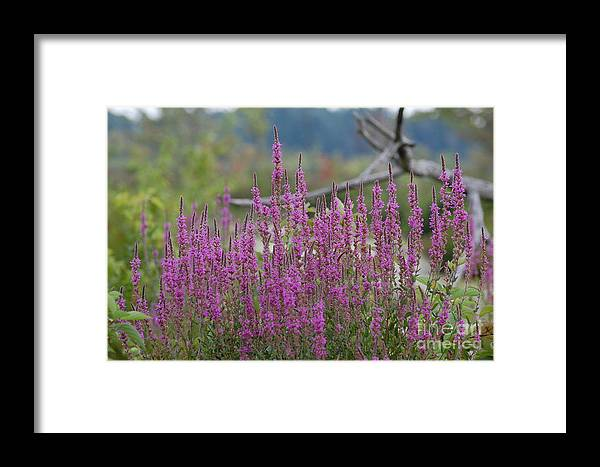 Flowers Framed Print featuring the photograph Purple Pleasures by Bianca Nadeau