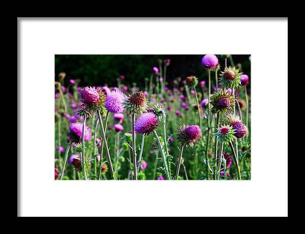 Landscape Framed Print featuring the photograph Purple Thistle by Toni Hopper