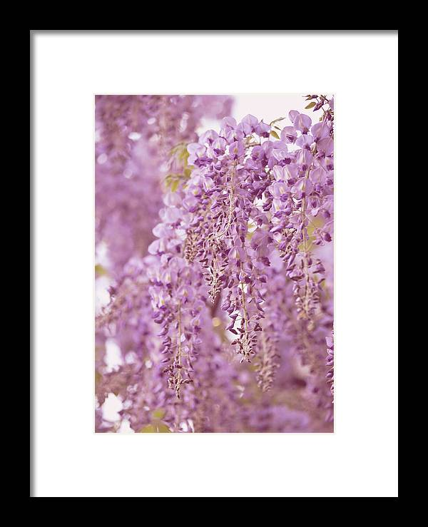 Wisteria Framed Print featuring the photograph Purple Wisteria by Ginger Wagner