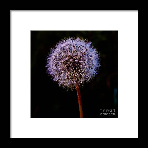 Photography Framed Print featuring the photograph Quite A Dandy by Terry Cotton