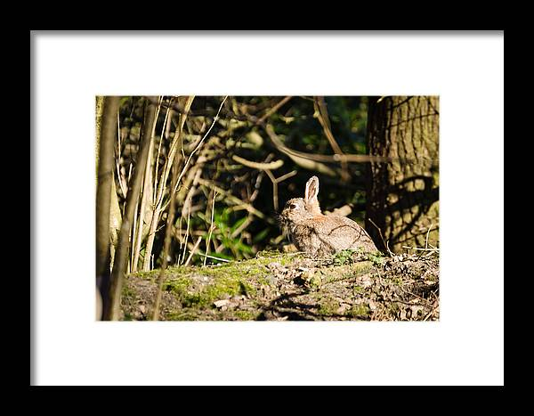 Animal Framed Print featuring the photograph Rabbit In The Woods by David Head