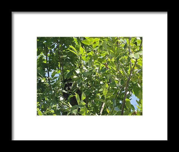 Raccoon Framed Print featuring the photograph Raccoon by Gina Boebel