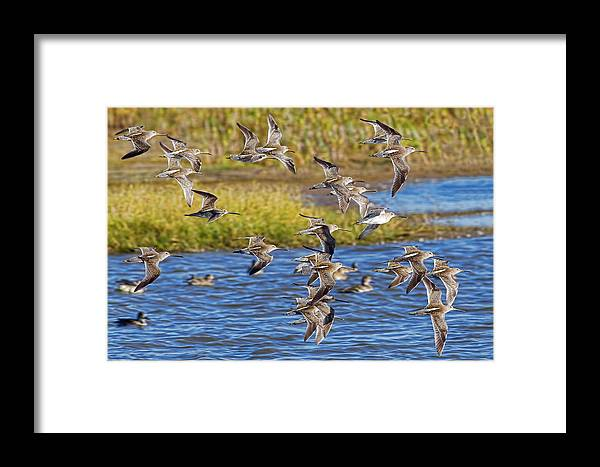 Flight Framed Print featuring the photograph Racing Stripes by Gary Holmes