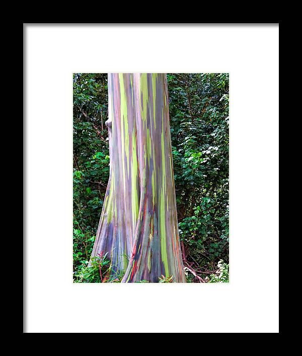Hawaii Framed Print featuring the photograph Rainbow Eucalyptus 3 by Dawn Eshelman