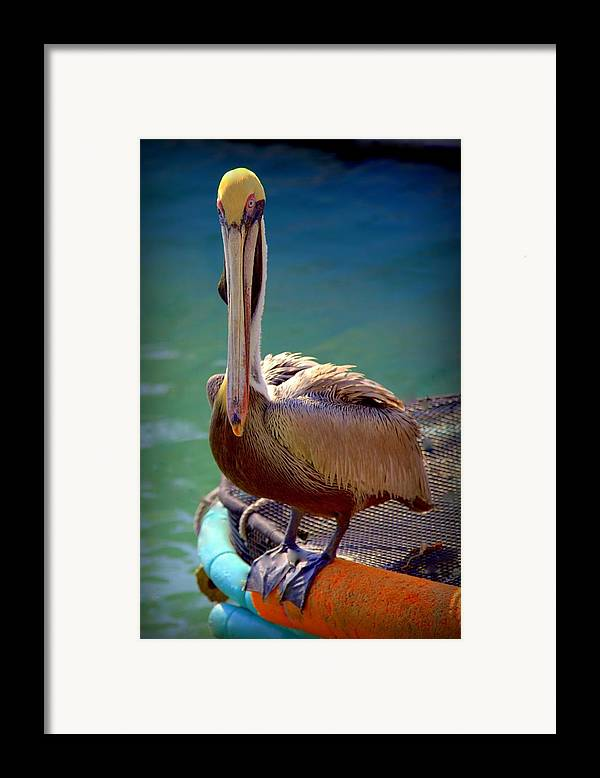 Pelicans Framed Print featuring the photograph Rainbow Pelican by Karen Wiles