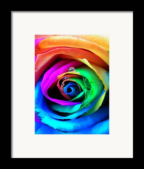 Rainbow Framed Print featuring the photograph Rainbow Rose by Juergen Weiss