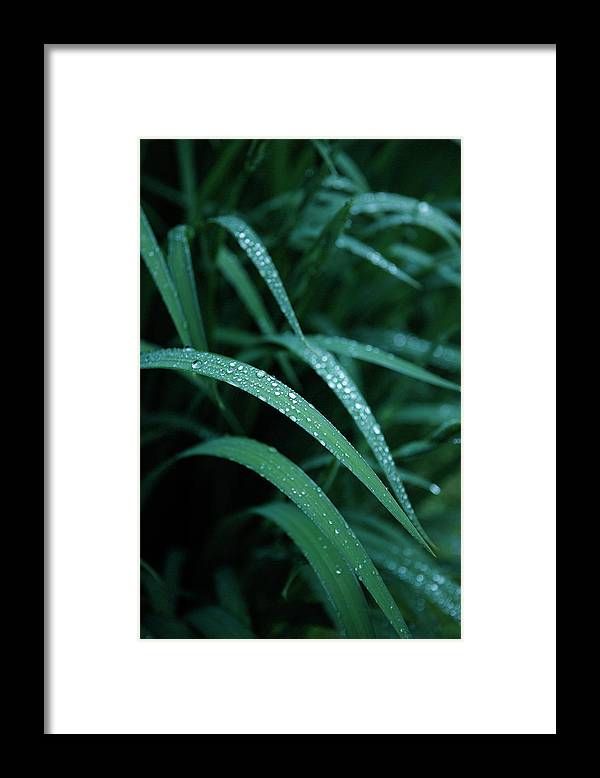 Tranquility Framed Print featuring the photograph Raindrop by Seiji Nakai