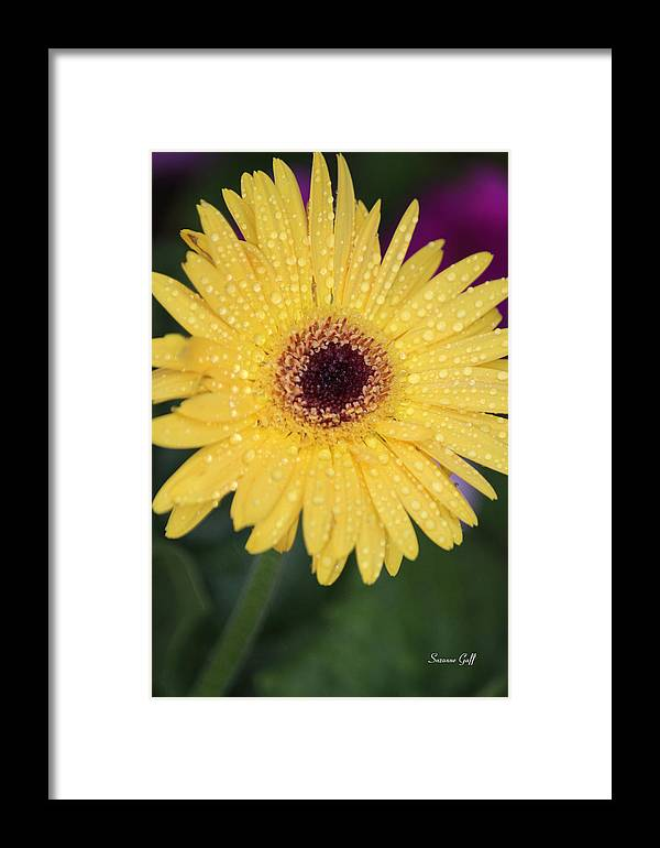 Yellow Framed Print featuring the photograph Raindrops Keep Falling On My Head by Suzanne Gaff