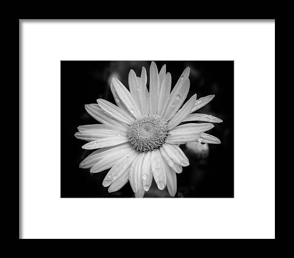 Daisy Framed Print featuring the painting Raindrops On Daisy by Lynne Jenkins