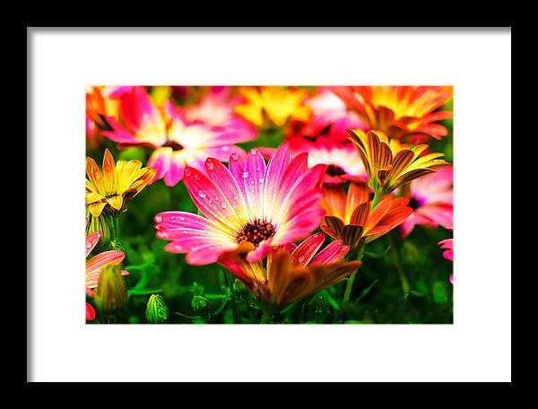 Flower Framed Print featuring the photograph Raindrops On Flower by Corey Wexler