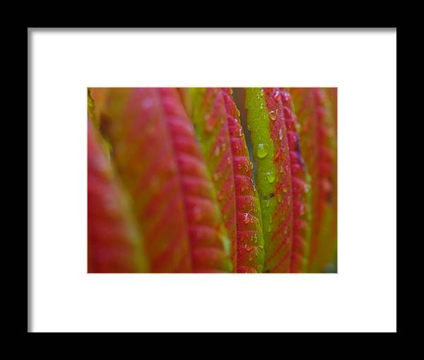 Autumn Framed Print featuring the photograph Rainy Aftermath by Juergen Roth