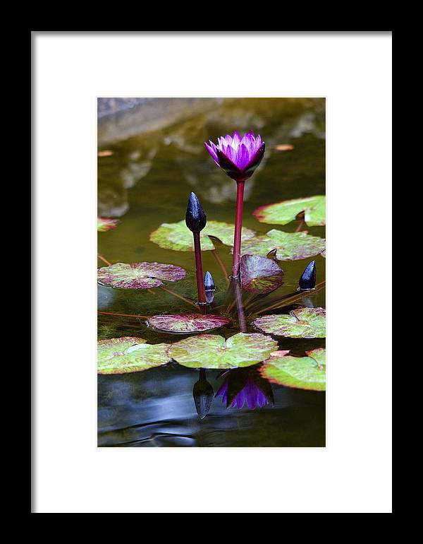 Roy Williams Framed Print featuring the photograph Rainy Day Water Lily Reflections I by Roy Williams