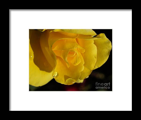 Yellow Framed Print featuring the photograph Rainy Morning by Jacklyn Duryea Fraizer