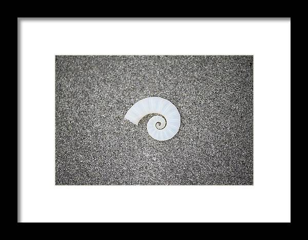 Shell Framed Print featuring the photograph Rams' Horm Shell by Nolan Taylor