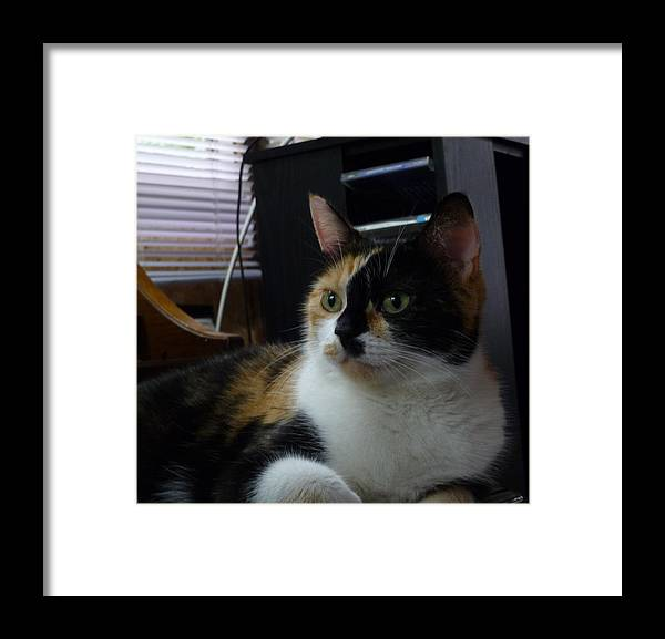 Cat Photography Framed Print featuring the photograph Phantom Calico by Lingfai Leung