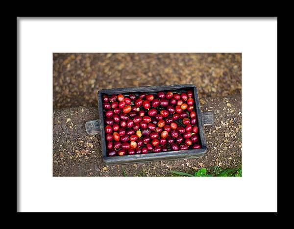 El Trapiche Framed Print featuring the photograph Raw Coffee by Allan Morrison