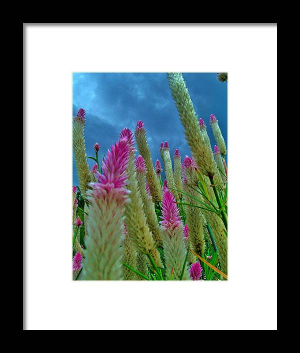 Framed Print featuring the photograph Reach For The Sky by Hominy Valley Photography
