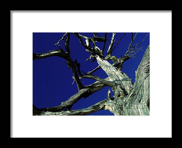 Sky Framed Print featuring the photograph Reach For The Sky by Janice Westerberg
