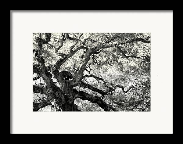 Abstract Trees Framed Print featuring the photograph Reaching For Heaven by Karen Wiles