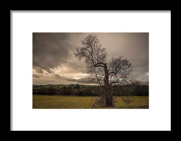 Trees Framed Print featuring the photograph Reaching For The Light by Jason Lanier