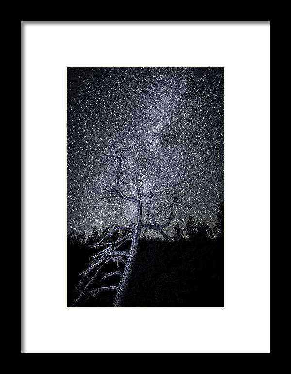 Nancy Strahinic Framed Print featuring the photograph Reaching For The Stars by Nancy Strahinic