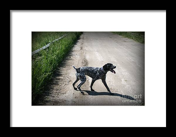 Dog Framed Print featuring the photograph Ready For A Walk by Linda Galok