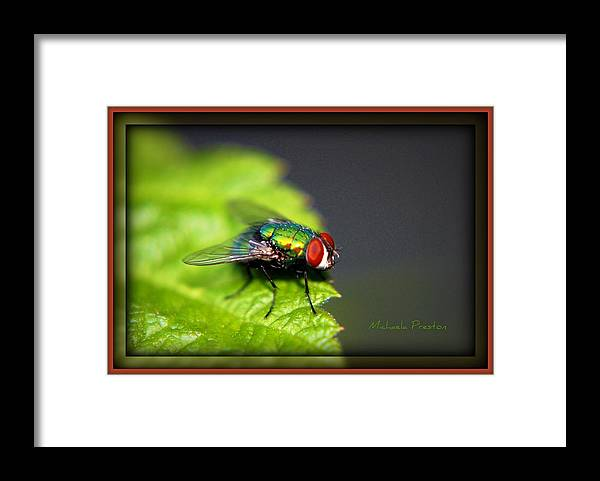 Nature Framed Print featuring the photograph Ready..go by Michaela Preston