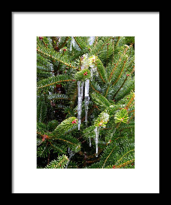 Christmas Tree Framed Print featuring the photograph Real Christmas Icicles by Rich Franco