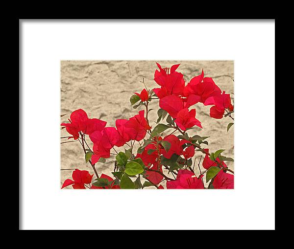 Relaxed Framed Print featuring the photograph Red And Green On Yellow by Pete Marchetto