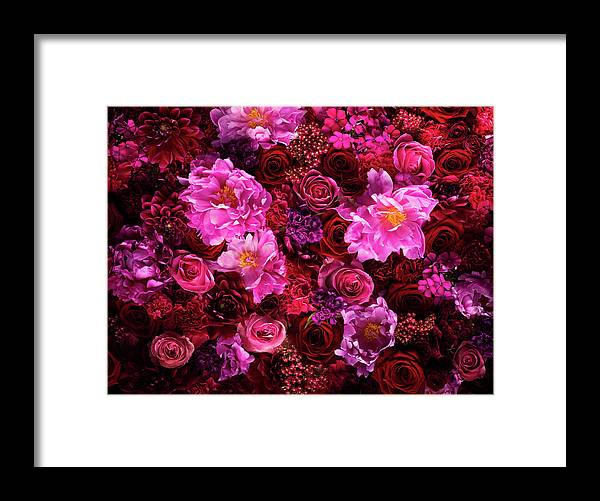 Tranquility Framed Print featuring the photograph Red And Pink Cut Flowers, Close Up by Jonathan Knowles