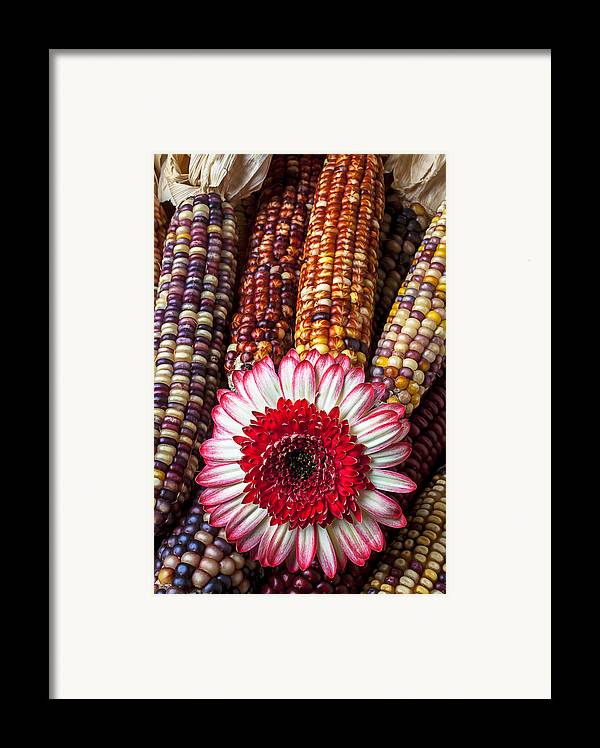 Indian Framed Print featuring the photograph Red And White Mum With Indian Corn by Garry Gay