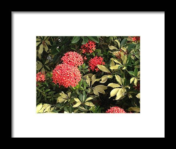 Red Framed Print featuring the photograph Red Antigua Balls by Ron Torborg