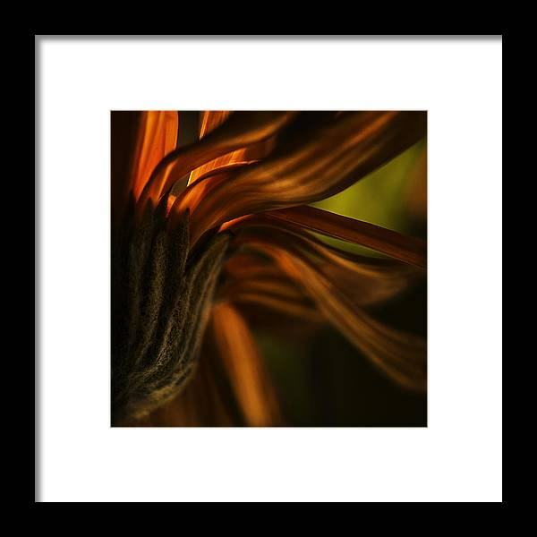 Nature Framed Print featuring the photograph Red Autumn Blossom Detail by Peter v Quenter