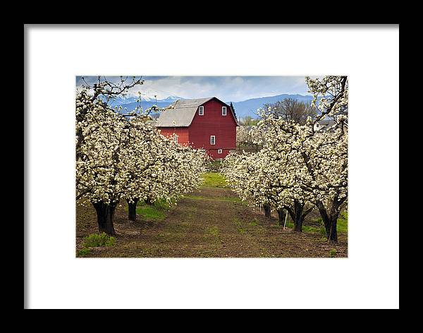 Barn Framed Print featuring the photograph Red Barn Spring by Mike Dawson