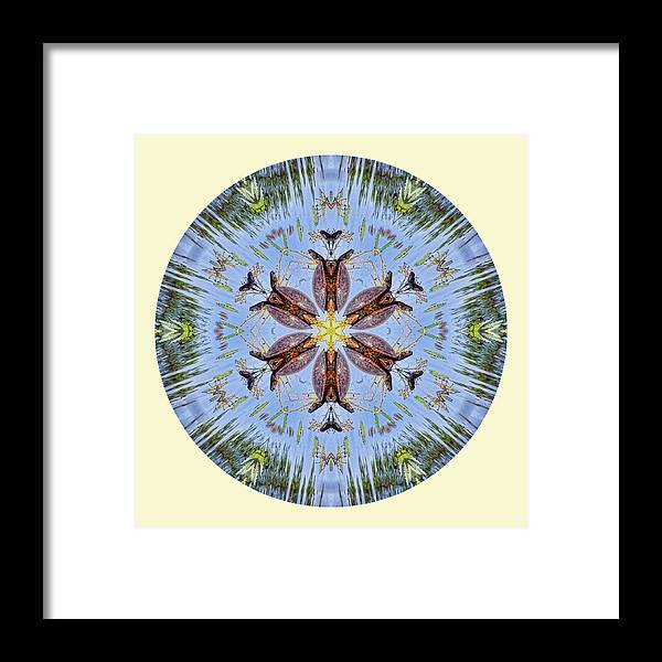 Mandala Framed Print featuring the photograph Red Bellied Turtle Mandala by Beth Sawickie