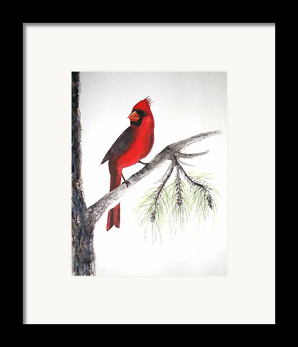Bird Framed Print featuring the painting Red Cardinal by Sibby S