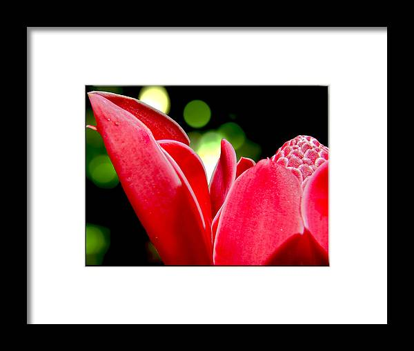 Floral Prints Framed Print featuring the photograph Red Chalice by Roy Foos