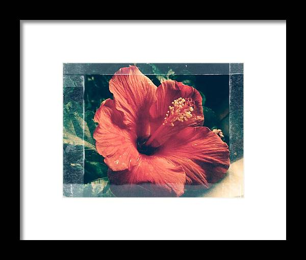 Framed Print featuring the photograph red by Debra Wynn