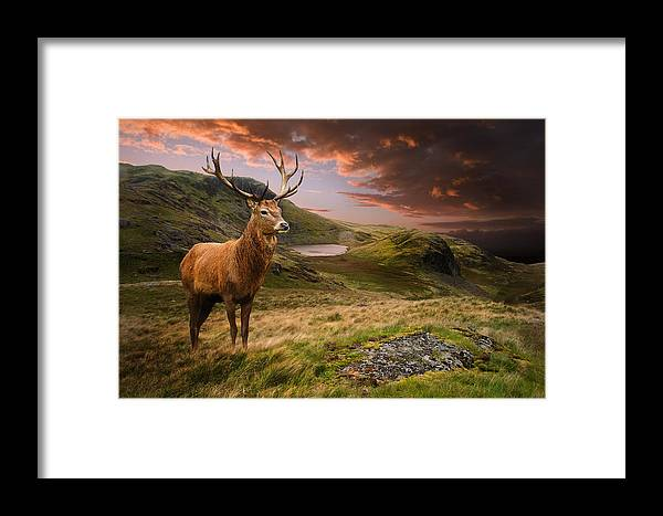 Landscape Framed Print featuring the photograph Red Deer Stag And Mopuntains by Matthew Gibson