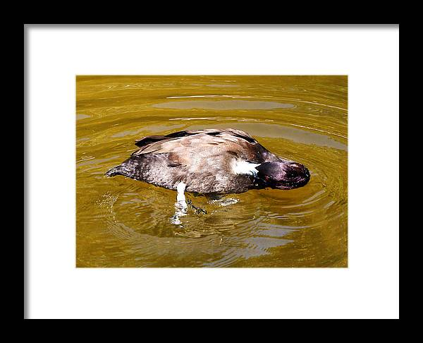 Red Eyes Framed Print featuring the photograph Red Eyes 3 by Dan Dennison