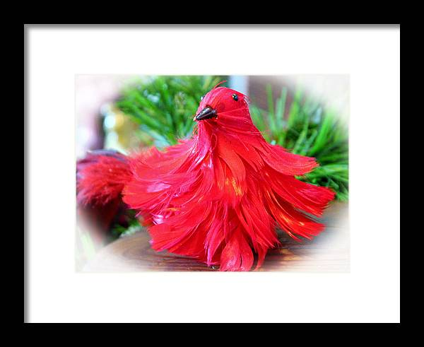 Bird Framed Print featuring the photograph Red Feathers by Cynthia Guinn