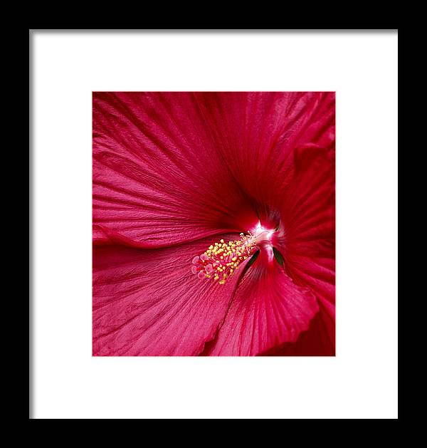 Red Flower 2 Framed Print featuring the photograph Red Flower 2 by Wes and Dotty Weber