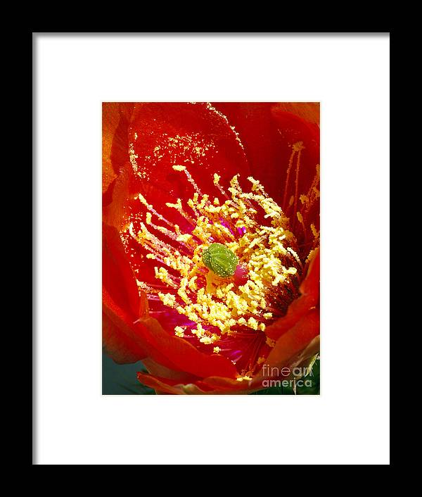 Red Framed Print featuring the photograph Red Flowered Prickly Pear by Douglas Taylor
