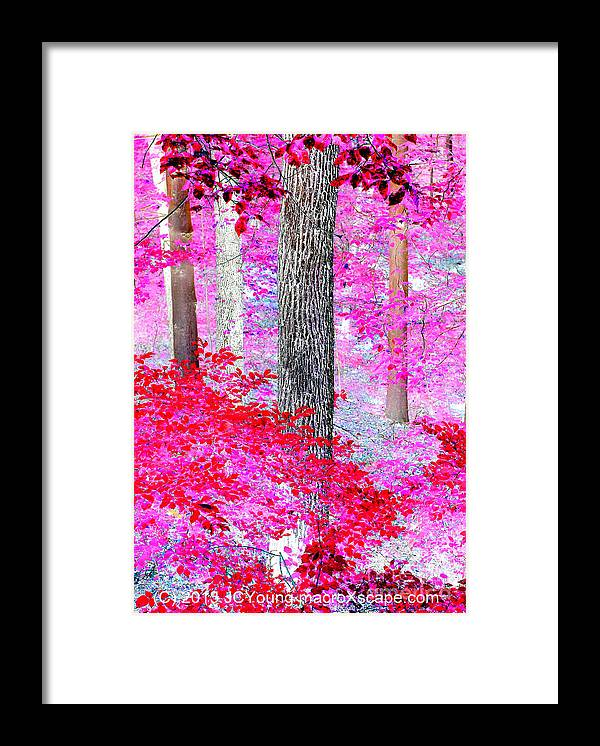 Dreamscape Red Forest Framed Print featuring the photograph Red Forest by JCYoung MacroXscape