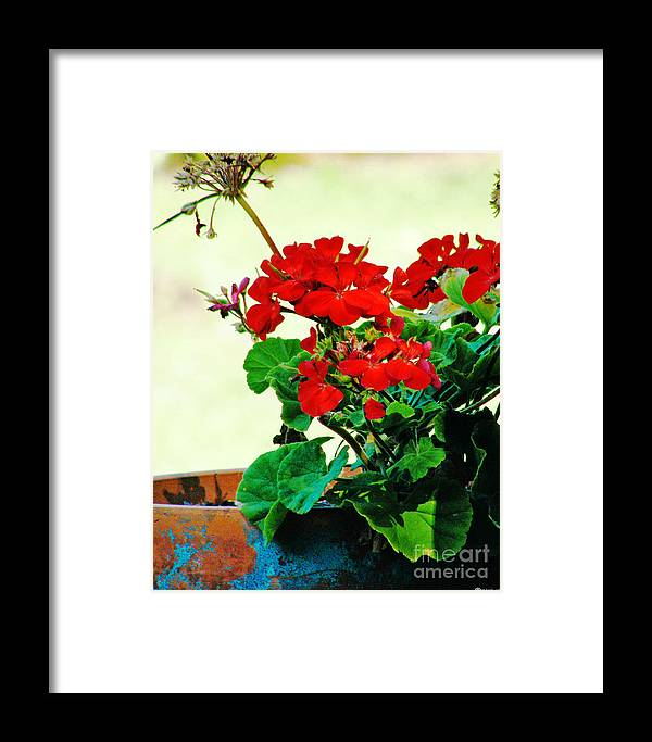 Flower Framed Print featuring the photograph Red Geranium by Lizi Beard-Ward